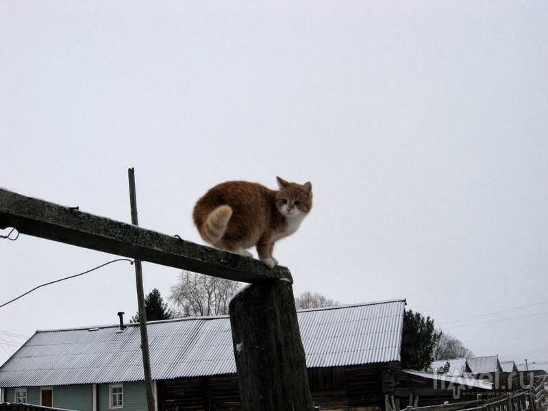 Хозяйская кошка Мурка не раз приходила к нам общаться / Россия