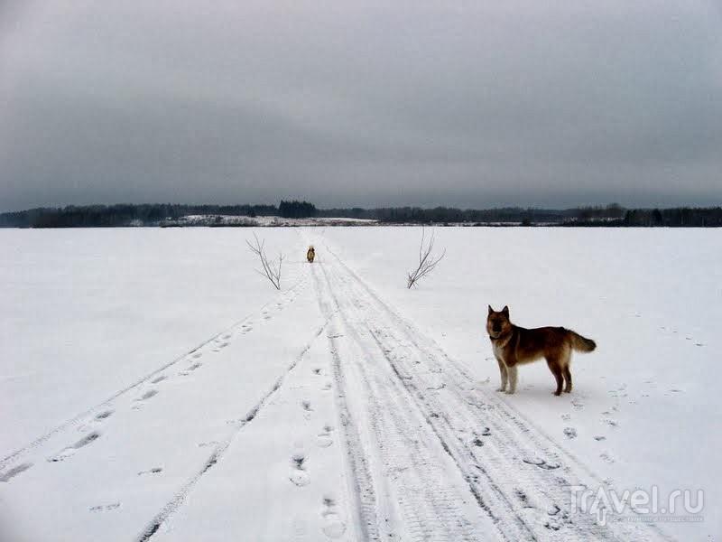 Вешковая дорога из Вершинино в Немяту / Россия
