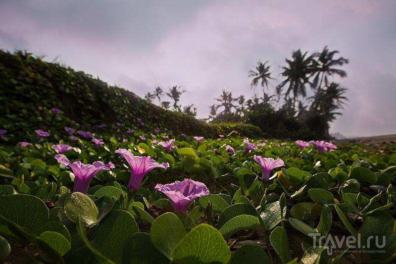 Новый год на Шри-Ланке / Фото со Шри-Ланки