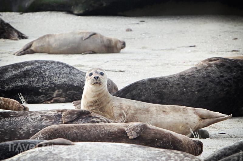 Морские котики Сан-Диего / Фото из США