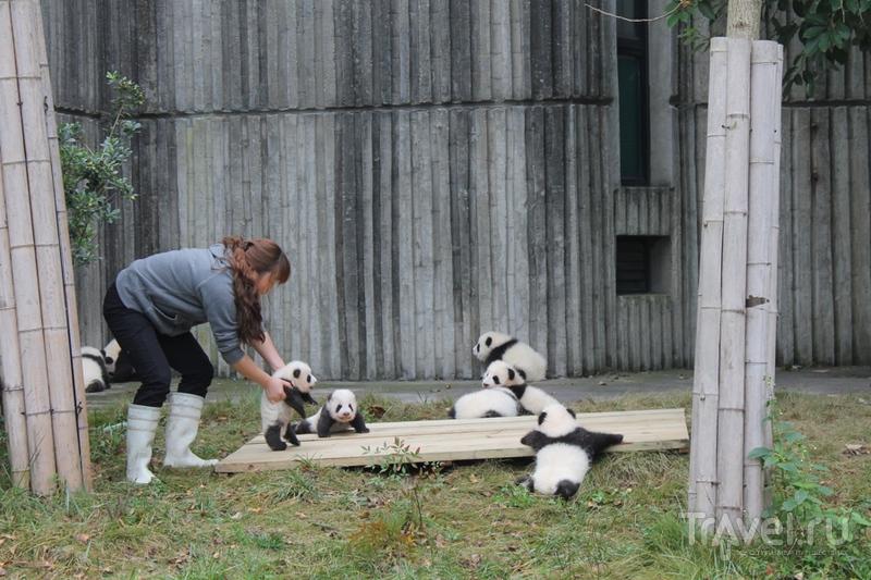Китай: Чэнду - панды, танцы и езда по-китайски / Китай
