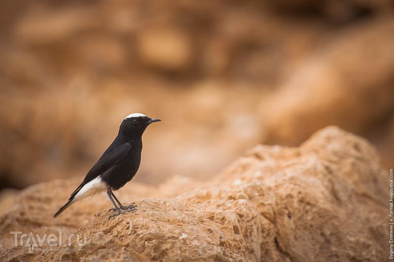 Животный мир Израиля / Фото из Израиля