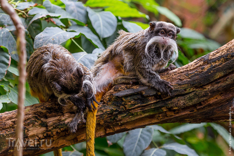 Портреты лондонского зоопарка / Фото из Великобритании