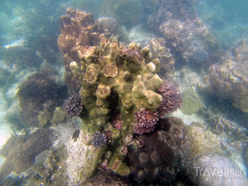 Кораллы в окрестностях острова Самуй, Таиланд / Фото из Таиланда