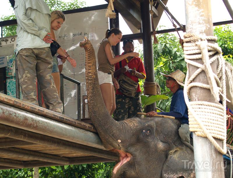 Катание на слонах в Namuang Safari Park, остров Самуй, Таиланд / Фото из Таиланда