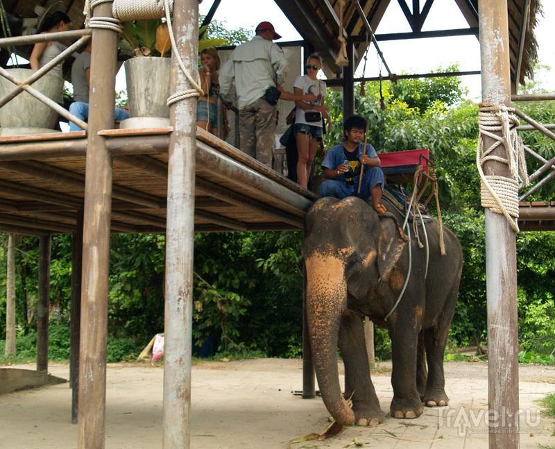 Namuang Safari Park на острове Самуй в Таиланде / Фото из Таиланда