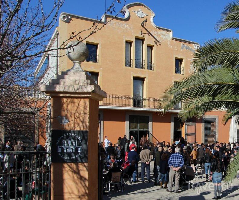 Луковая лихорадка в Каталонии / Испания