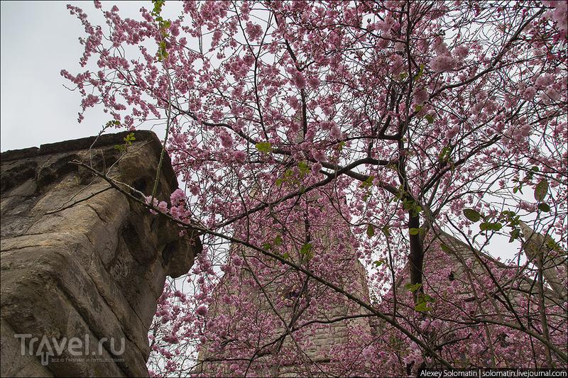 Прогулка по весеннему Лондону / Великобритания