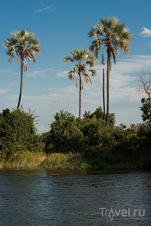 В гости к Ньяминьями. Зимбабве / Фото из Зимбабве