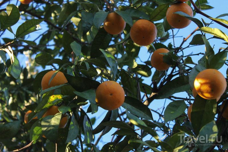 Батумский ботанический сад. Грузия / Фото из Грузии
