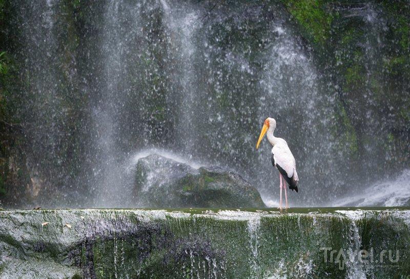 Аист у водопада