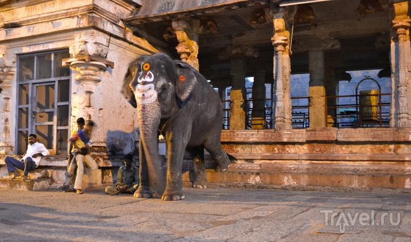Храмы и обезьяны. Хампи, Индия / Индия