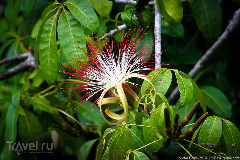 Джунгли дельты Ориноко. Венесуэла / Фото из Венесуэлы