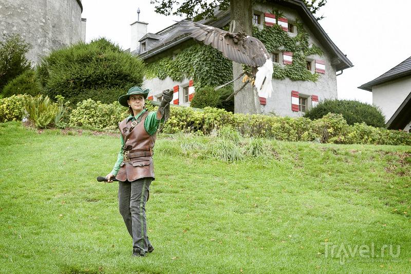 Соколиная охота. Зальцбург, Австрия / Фото из Австрии