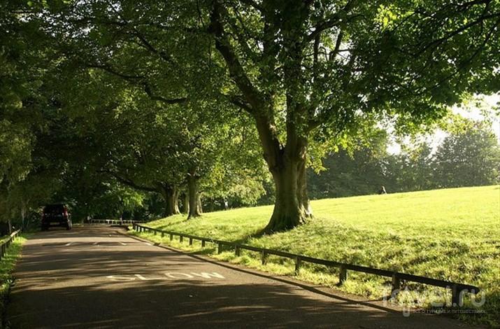 Александра-парк - отличное место для проведения пикников