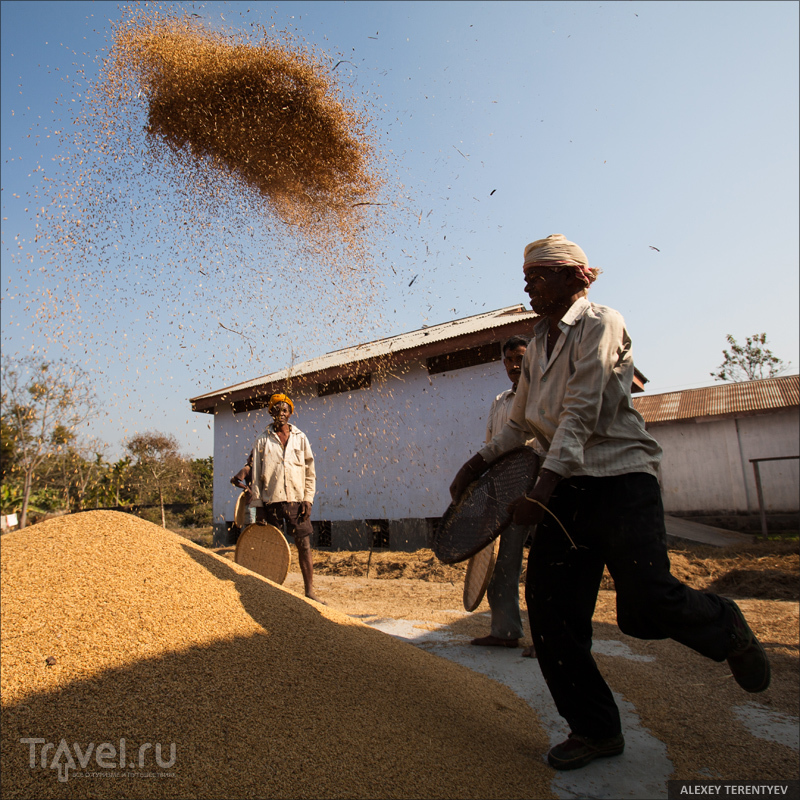 Золушки из Нагаленда. Индия / Индия