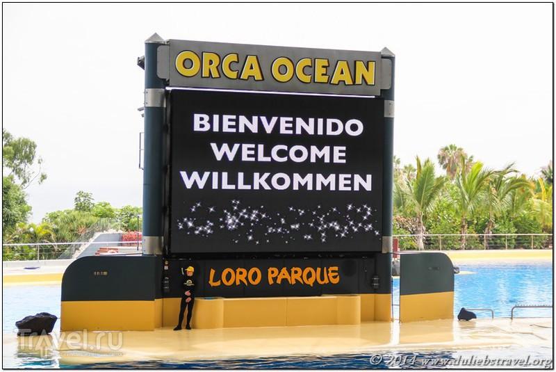 Достопримечательности Тенерифе: Лоро Парк. Испания / Испания