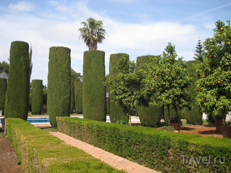 Сад Альбарда в Педрегере, область Валенсия / Испания