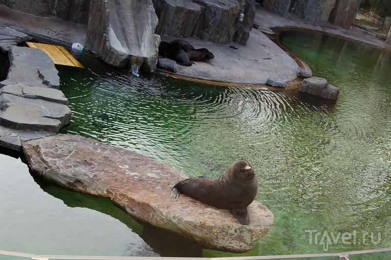 Пражский зоопарк весной. Чехия
