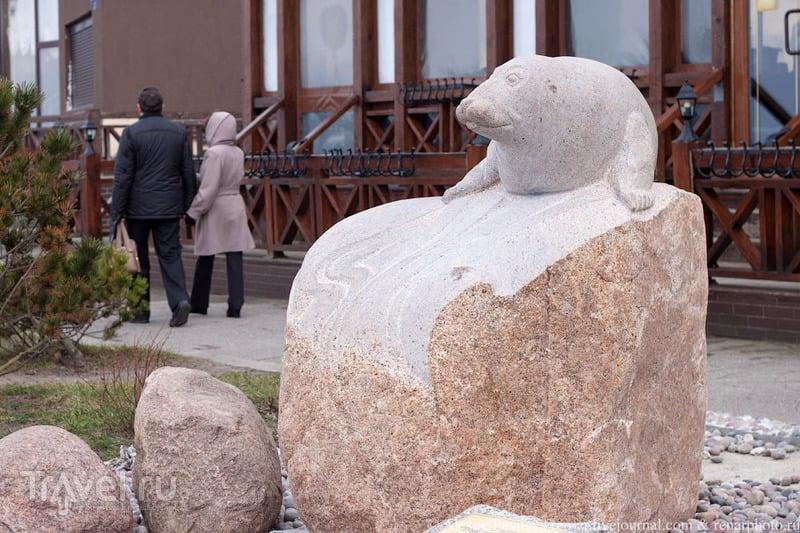 Скульптура балтийского тюленя в Зеленоградске (Кранц). Россия / Россия