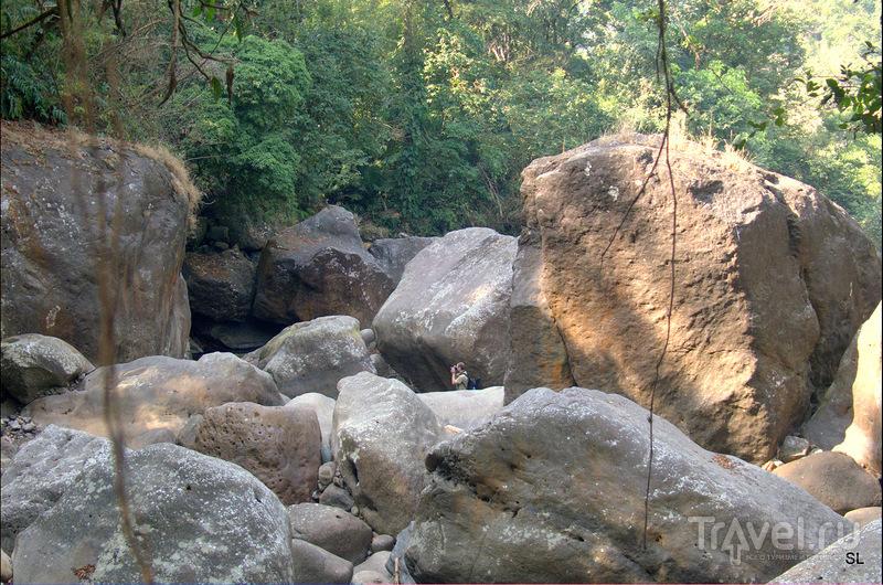 Living root bridges / Фото из Индии