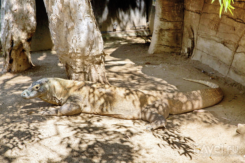 Зоопарк Сиднея - Taronga Zoo / Австралия