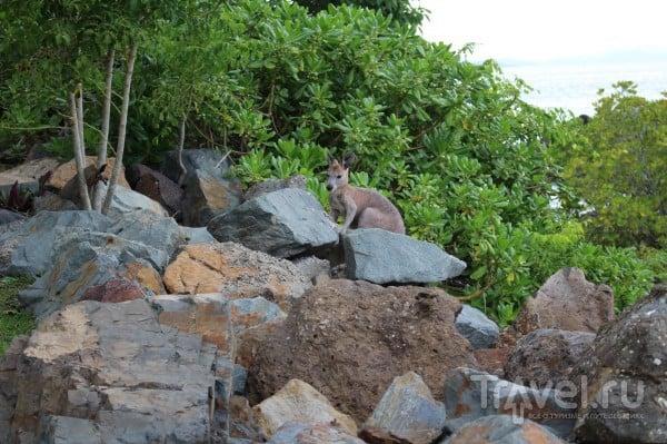 Про Австралию - Townsville, Airlie Beach и круиз на Whitehaven Beach / Австралия