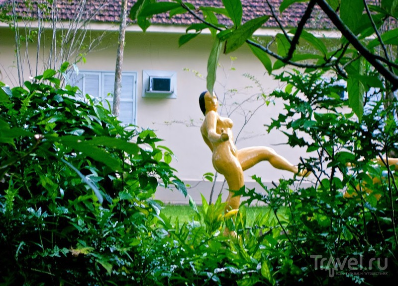 Ботанический сад в Рио-де-Жанейро / Фото из Бразилии