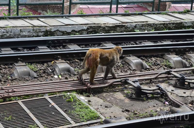 Гималайский поезд / Индия