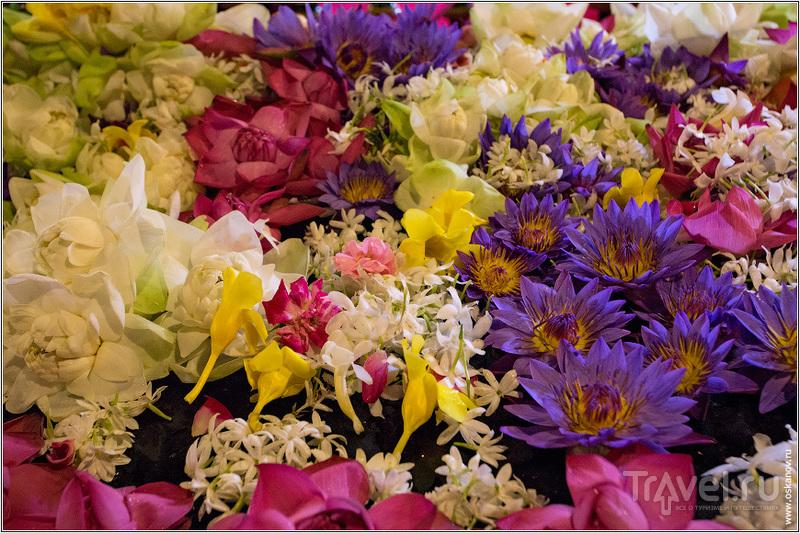 Шри-Ланка в принципе щедра на цветы / Шри-Ланка