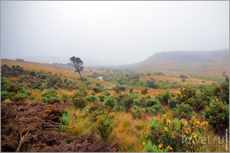 Чтобы добраться до обрыва, нужно пройти несколько километров по совершенно сказочному пейзажу / Шри-Ланка