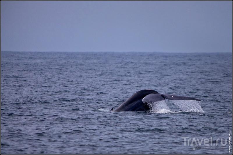 Синие киты - это отдельная песня, которую мне ещё только предстоит сложить / Шри-Ланка