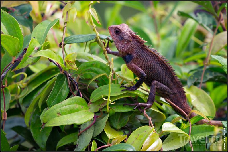 Одних только рептилий на острове насчитывается более двухсот видов / Шри-Ланка
