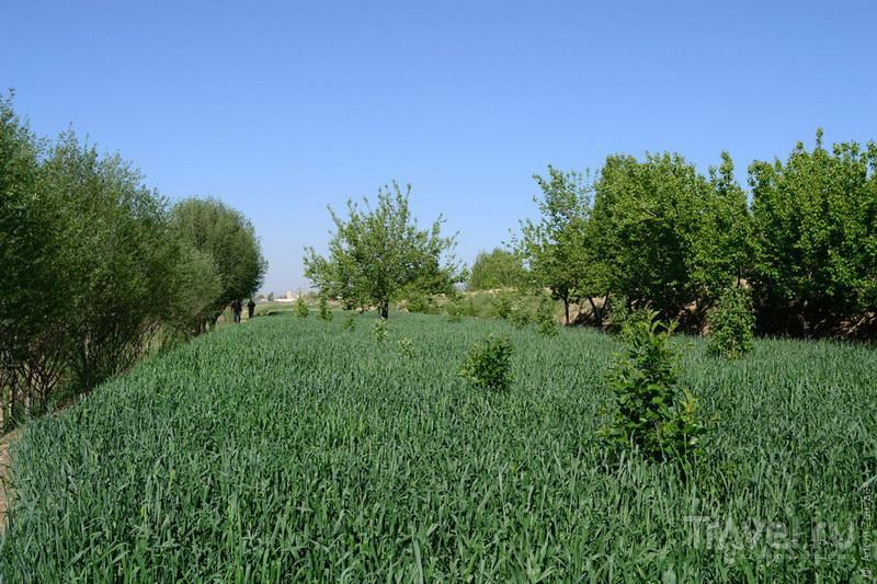 Узбекистан. Пустыня Кызылкум. Апрель 2011 / Фото из Узбекистана