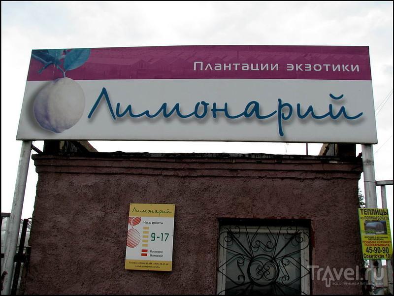 Лимонарий. Наровчатка. Челябинская область / Россия