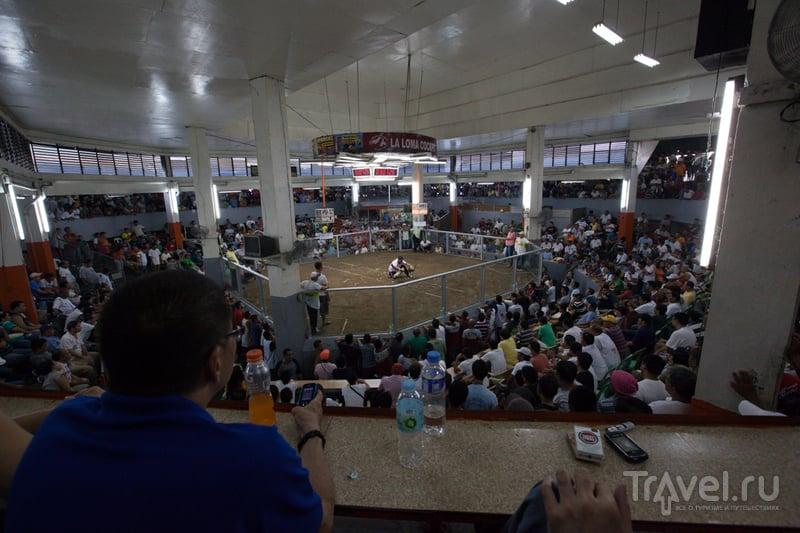 Сабонг: легальные петушиные бои на Филиппинах / Филиппины