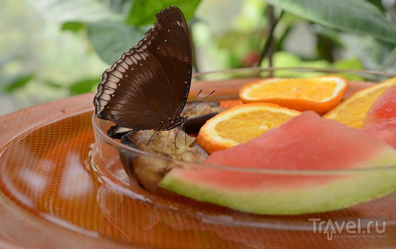 Бабочки острова Майнау / Германия