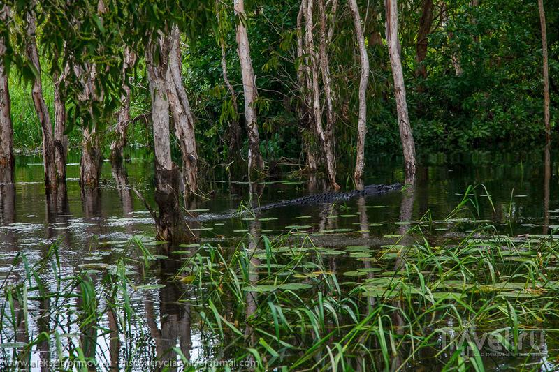 Затерянный мир парка Какаду / Фото из Австралии