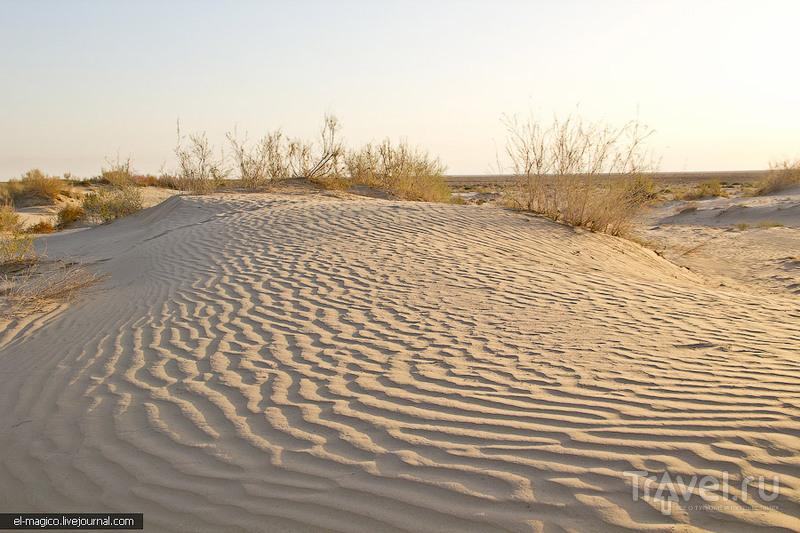 Остатки Аральского моря и жители пустыни: лисы, змеи и черепахи / Фото из Узбекистана