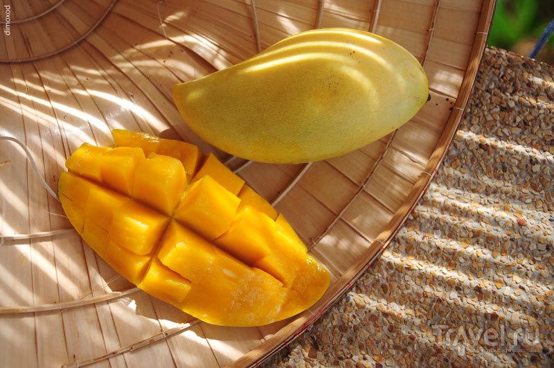 Топ-10 моих любимых фруктов в Таиланде / Таиланд