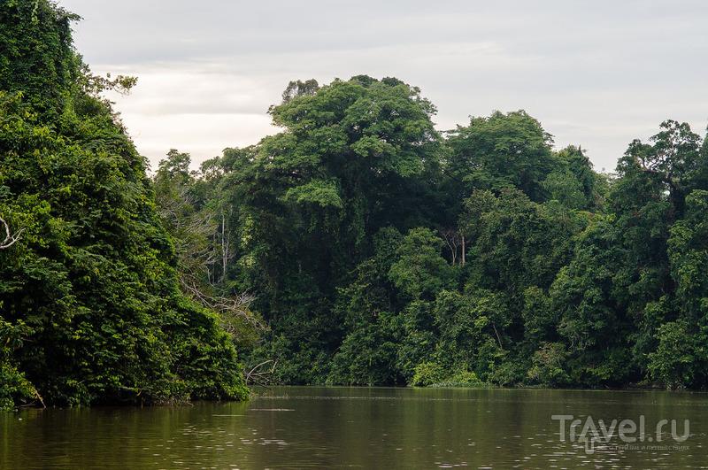 Малайзия. Остров Борнео. Поездка по реке Кинабатанган / Фото из Малайзии