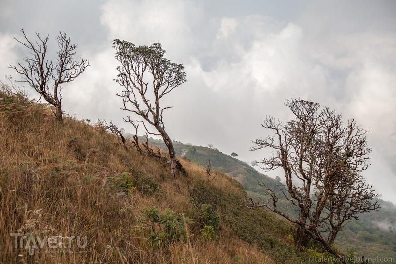 Другой Таиланд. Холод, горы, ромашки / Таиланд