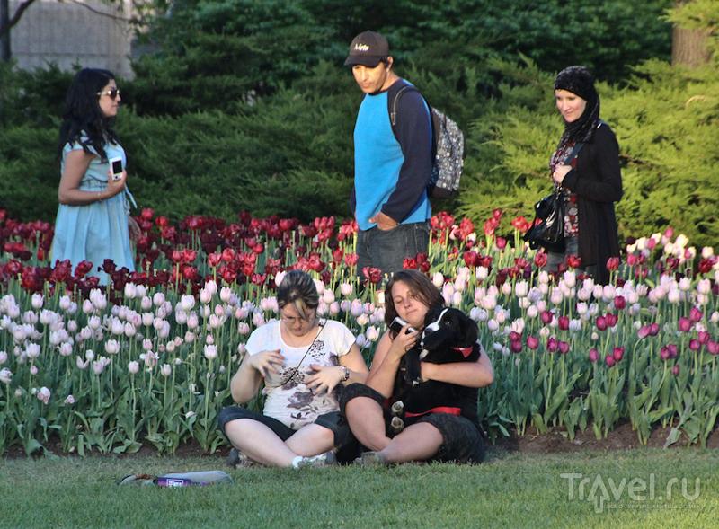 Фестиваль тюльпанов в Оттаве / Канада