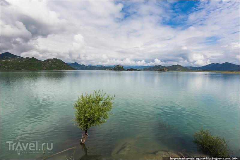Скадарское озеро в Черногории / Фото из Албании