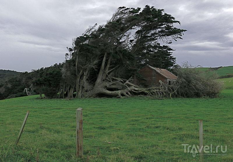 Сарай под кроной деревьев / Новая Зеландия