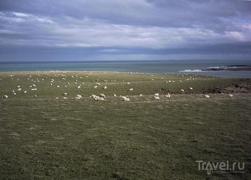 Овцы - жители юга Новой Зеландии / Новая Зеландия