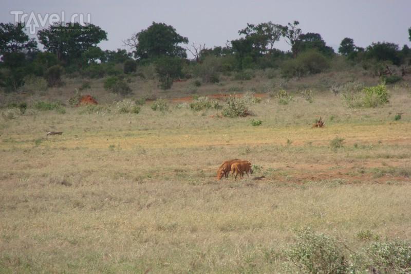 Восточный Цаво / Кения