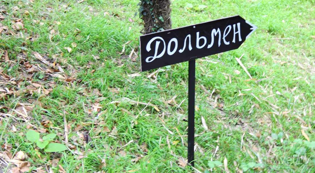 Дендрарий. Сочи / Россия