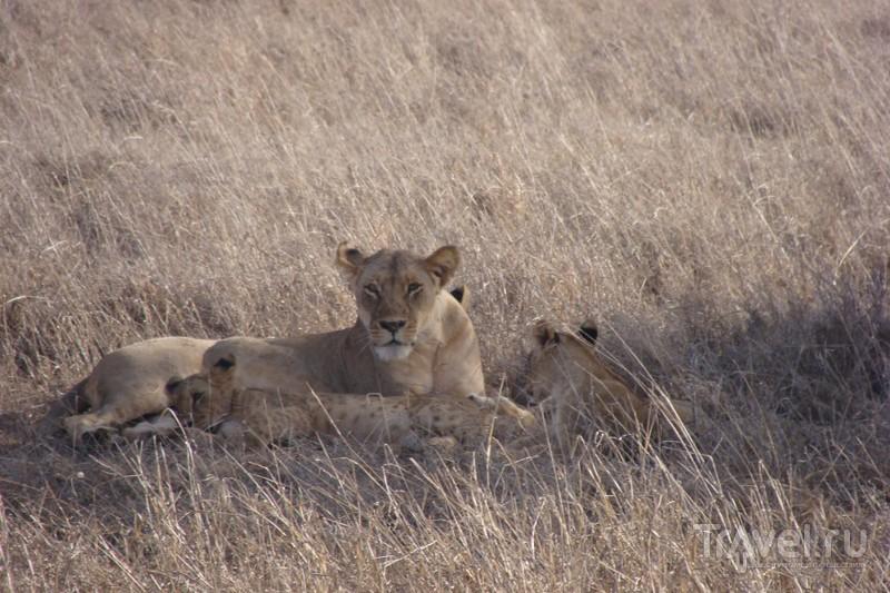 Кения, октябрь 2013 / Кения