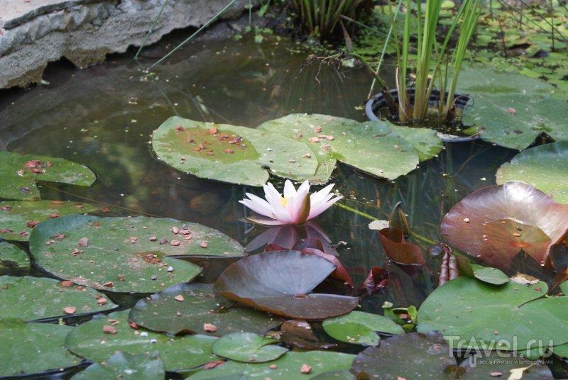 В Ботаническом саду Минска можно увидеть около 10 тысяч различных растений